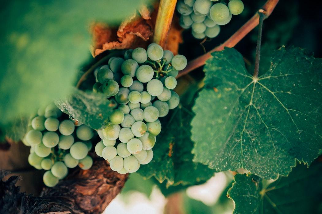 concurso internacional de vinos y espirituosos