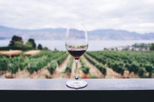 ruta de vino
